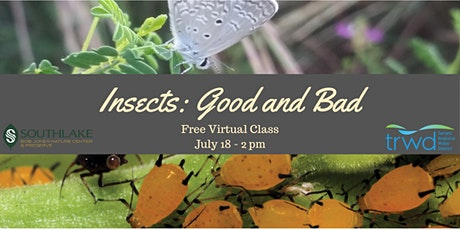 Insects: Good and Bad Tickets