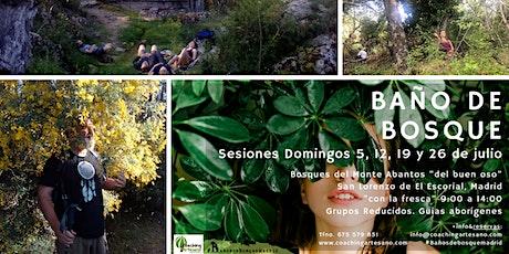 Baño de Bosque Domingo 12 jul. Bosques del Monte Abantos del buen oso tickets