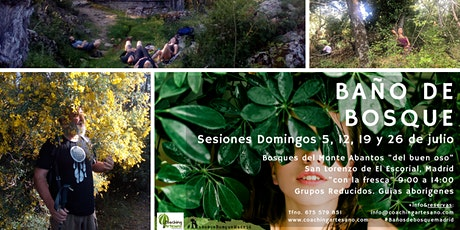 Baño de Bosque Domingo 19 jul. Bosques del Monte Abantos del buen oso tickets