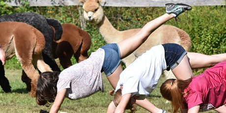 Yoga With Alpacas - Sunday July 12 @ 9am tickets