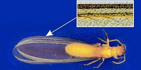 Termite Identification Training tickets