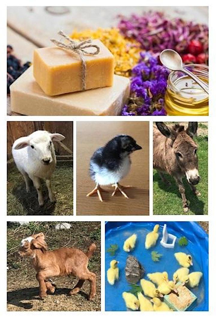 LEVEL 3 - Goat's Milk Soap Making on the Farm image