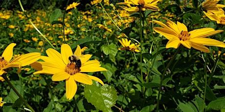 Webinar: Pollinators in Peril tickets