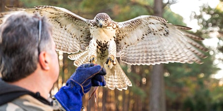 Nature Photo Tour with Nova the Hawk tickets