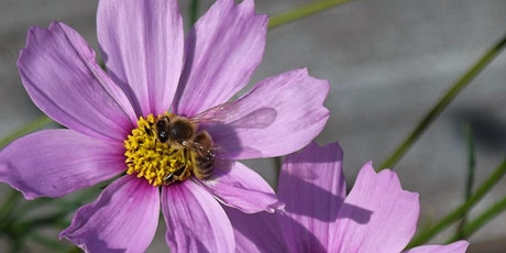 Bees, bee keeping  and beneficial insects tickets