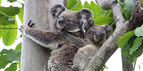 NaturallyGC Koala Conservation Walk tickets