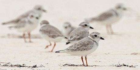 Identifying Shorebirds with Marc Ribaudo tickets