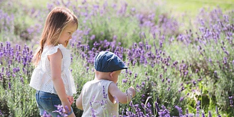 Lavender Field Mini Session billets