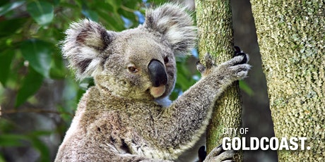 NaturallyGC Koala Tree Planting tickets
