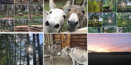 Fairytale Forest-Walk Donkeys, Picnic, Feed Farm Animals (Private Use) Aug tickets