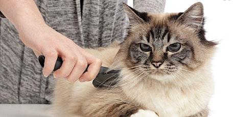 WEBINAR: Initiatie huid en vacht - kat tickets
