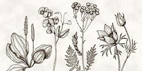 Herbal Specimen Drawing Workshop tickets