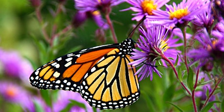 Butterfly Watching - Virtual Program tickets