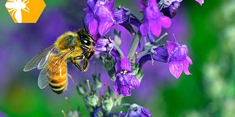 Virtual Wanna bee a Beekeeper? An introduction to hobbiest Beekeeping tickets