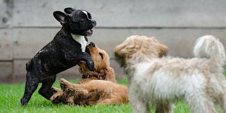 STAYCATION: Begeleide speelweide puppy - koele zomer tickets