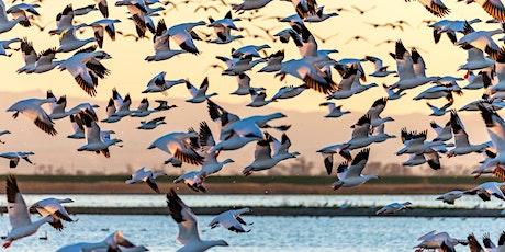 Sandhill Crane Watch in Nebraska Webinar tickets