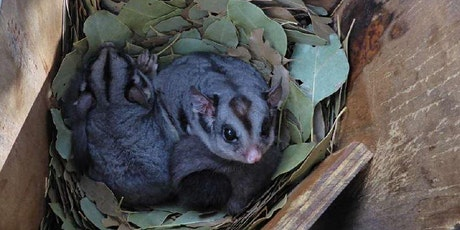 Urban Ecology of Sugar Gliders and Nest Box Monitoring in Greater Melbourne tickets
