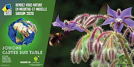 Sortie nature: les plantes sauvages comestibles. billets