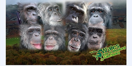 FREE Pre-Booked Choice of Day Ticket for Wales Ape and Monkey Sanctuary tickets