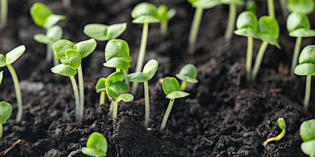 Simple Steps to Grow Sprouts: ONLINE Workshop with Manny Wong tickets