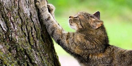 Cat Vision: Natuurlijke behoeftes tickets