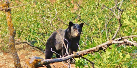 Rox Revealed: Bears Get Ready for Winter- Inside tickets