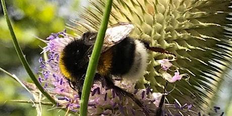 Bumblebee Field Identification Course tickets