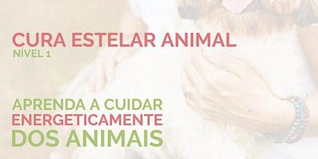CURA ESTELAR ANIMAL - nível 1 (curso online) ingressos
