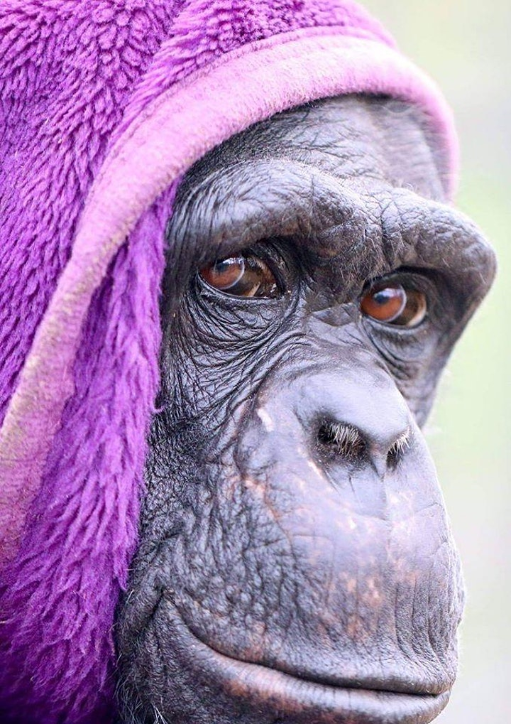 FREE Pre-Booked Choice of Day Ticket for Wales Ape and Monkey Sanctuary image