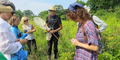 Butterfly Identification Workshop tickets