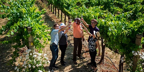 1-day Redwoods and California Wine Country Tour tickets