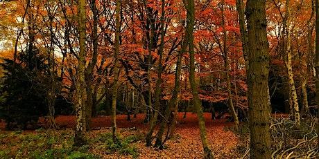 Tremendous Trees Educational Walk Gloucestershire tickets