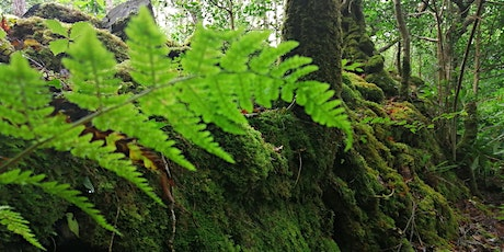 Glengarriff Forest Bathing Experience tickets