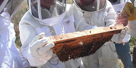 Spring Beekeeping Inspection Workshop tickets