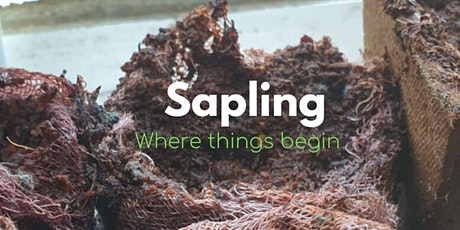 Everything begins somewhere - well-being for work & life (Sapling Taster) tickets