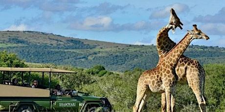 Live Safari from Shamwari Game Reserve tickets