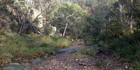 Pyrites Creek 20km Circuit Hike on the 2nd of August, 2020 tickets