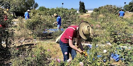 Heritage Rose Garden Volunteer Workday tickets