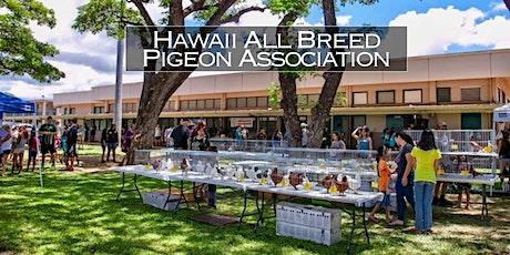 Pigeon Club Meeting - Hawaii All Breed Pigeon Association Summer Meeting tickets