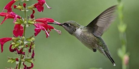 Perennials & Pollinators tickets