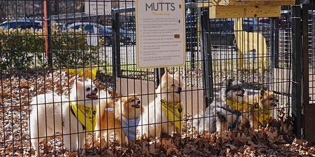 MUTTS Canine Cantina Breed Meetups - Golden Retrievers tickets