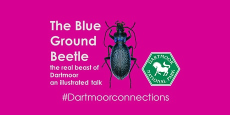 Dartmoor Connections- The Blue Ground Beetle-The real beast of Dartmoor tickets