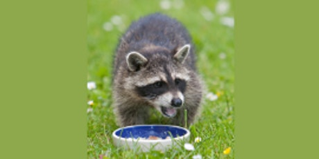 Animal Welfare Small Charities Meet Up tickets