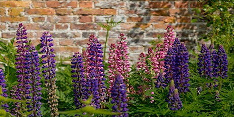 Walled Garden Open Days tickets