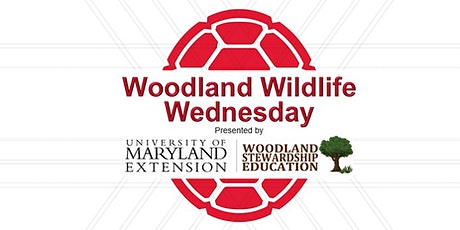 Woodland Wildlife Wednesday Webinar tickets