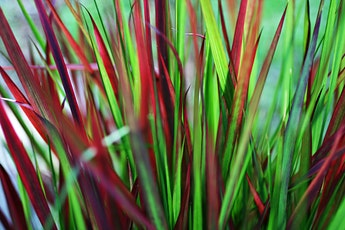 Fabulous Fall Grasses tickets
