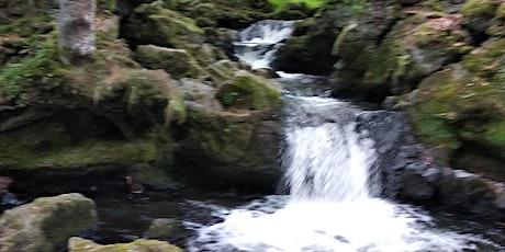 Yoga et nature billets