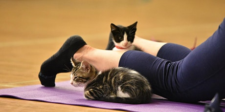 Kitten Yoga - Virtual tickets