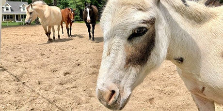Meet and Greet our Horses and Mini Donkey tickets