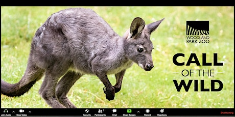 Call of the Wild - Wallabies tickets